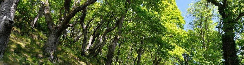 Create and manage woodland